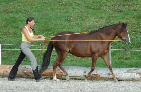Andrea Andrighetto mit Leonora am Langzügel in ruhigem Tölt
